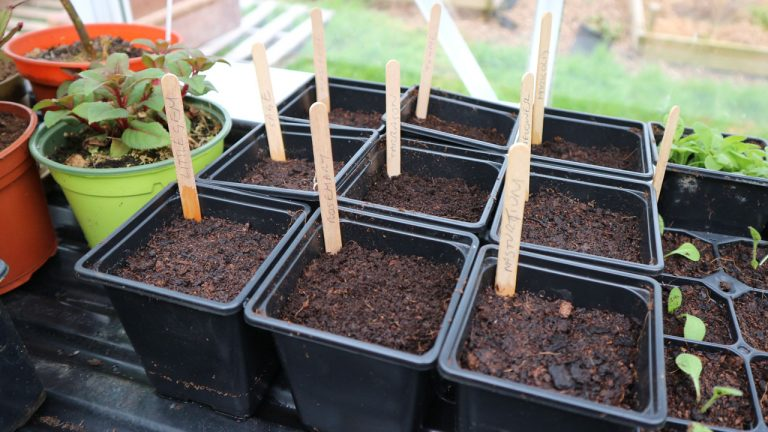Flower Seed Sowing