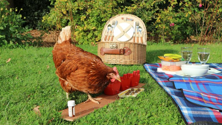 Rose Goes on a Picnic
